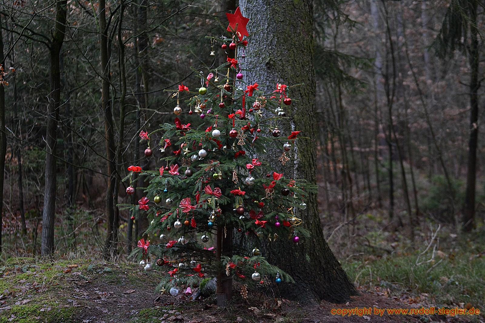 Weihnachtsbaum am TRIMM-DICH-PFAD Bayreuth 016-S - 1600x1200
