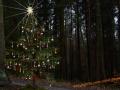 Weihnachtsbaum am Buchstein 007-Bearb2 (1600x1200)