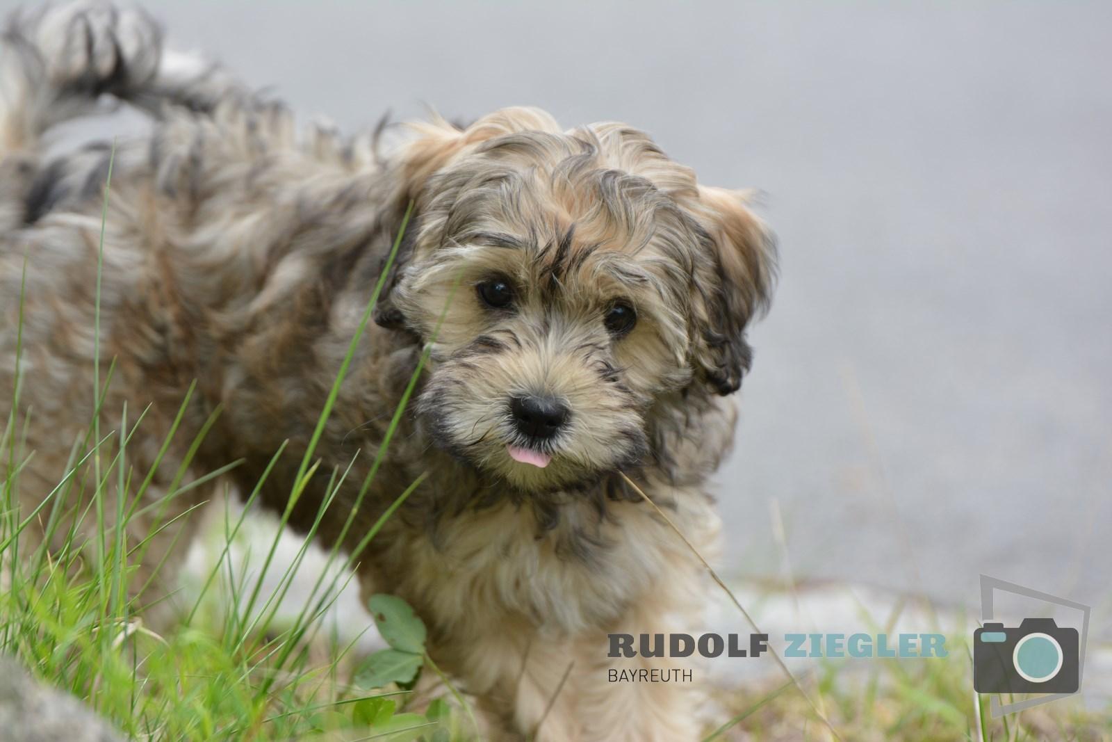 Hund RUDI 027 (1600x1200)