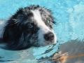 Hundebadetag im Kreuzsteinbad 2016 017-S (1600x1200)