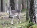 Wildgehege Veldensteiner Forst 058-A-S - 1600x1200